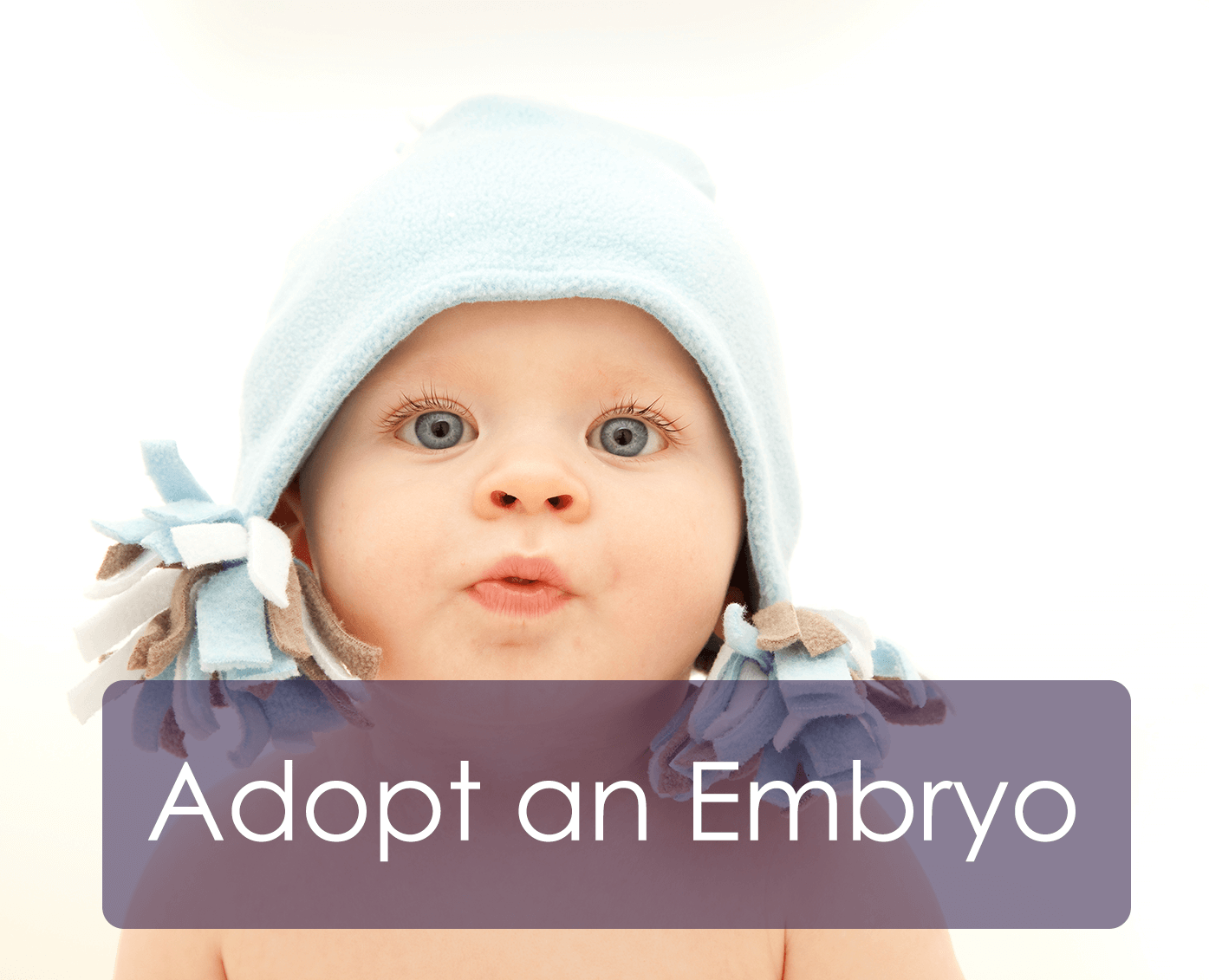 Adopt an Embryo